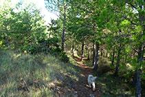 El tramo de sendero por bosque antes del lomo.