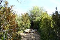 La entrada de la cueva de Anes está medio escondida entre bojes.