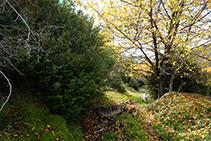 Después de rodear el prado en bajada pasamos entre bojes y nogales y nos adentramos en el bosque.