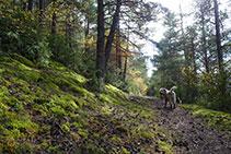 Tramo de camino por el bosque, muy agradable.