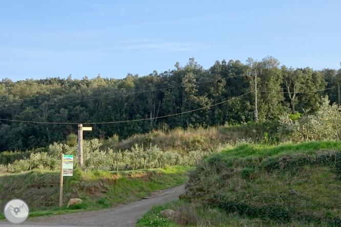 El volcán del Puig d