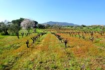 El paisaje de la llanura de Calonge.