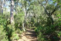 Entre pinos y alcornocales.
