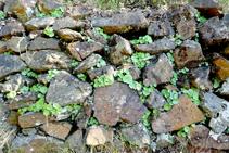 Muros de piedra seca.