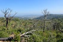El bosque quemado del Puig Cargol.