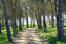 El pinar mediterráneo.