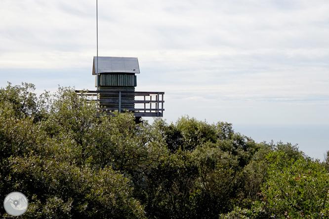 Puig de Cadiretes (519m) en la Ardenya 1
