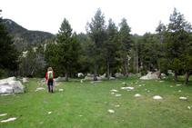 Caminamos entre pinos y prados.