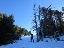 El bosque se abre, estamos llegando al refugio Oller