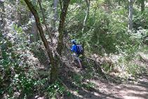Sendero que se adentra en el bosque: es el camino que sube hacia la Roca del Corb.