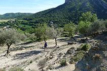 Campo de olivos.