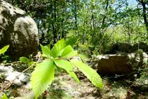 Bosques de castaño y bloques de granito.