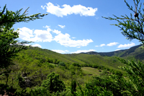 Bosques del macizo de las Salines.