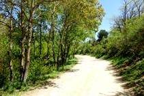 Camino de Les Illes al collado de Manrella.