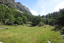 Bonito prado de alta montaña.