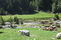 Rebaño de vacas pastando en el Planell de Sant Esperit.