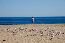 Playa de Lloret de Mar.