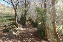 Continuamos por un sendero muy bonito remontando el valle.