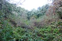 Cantera del Esquei d´en Pujol, cubierta por la vegetación.
