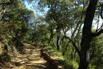 Bosque de alcornoques en la colina de la Palomera.