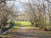 Ruta Voramera y Vía Verde en Amer