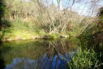 Vegetación de ribera en el río Brugent.