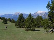 Prado alpino con el Pedraforca (2.497m) al fondo.