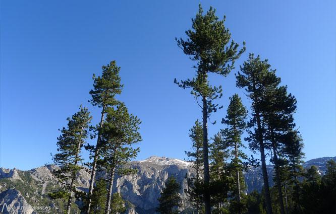 Ruta del Trencapinyes y mirador de Els Orris 1