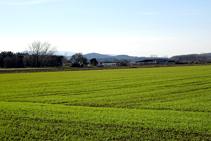 Campos de cereales en los alrededores de Vidreres.