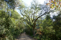 El bosque de los pantanos d´en Llobet.