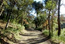 Camino a través del bosque de alcornoques.