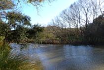Vegetación riparia en el arroyo de Llobet.