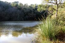 Vegetación de ribera en el pantano de Llobet.