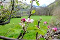 Árboles frutales llegando a Cerbi.