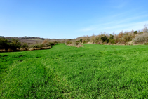 Campos de cereales.