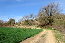Entre campos de cereales y bosques.