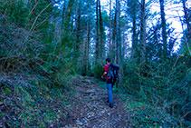 Camino que se adentra en el bosque, que ya no abandonaremos hasta llegar al santuario.