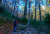 Camino dentro del bosque.