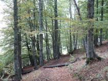 Espeso bosque junto al Saut deth Pish.