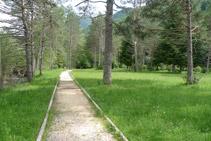 Avanzamos en direcció SE por un bosque de pinos.