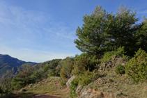 Bosques de pino rojo en la sierra de Puig d´Estela.