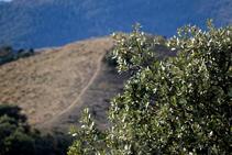Una encina enmarca el bonito tramo de cresta de la sierra Seca.