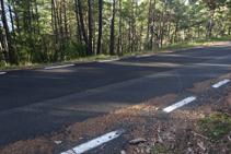 Marca de pintura amarilla en un pino al otro lado de la carretera.