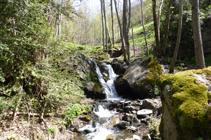 Bosque de ribera en el río de Llumeneres.