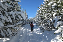 Bonito paisaje invernal con los árboles cargados de nieve.