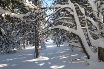 La cresta tiene algunos tramos un poco boscosos.