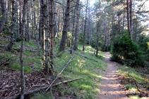 Interior del bosque.