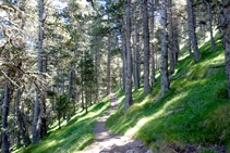 Tramo boscoso, muy agradable y bonito.