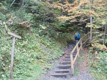 Empezamos a subir por entre medio del bosque por un camino bien señalizado.