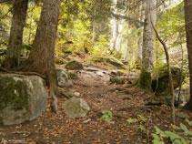 Subimos por el bosque de la Artiga de Lin.